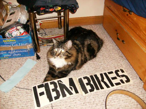 Capone riders cat