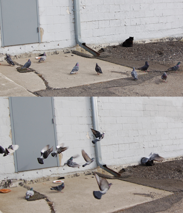 Pigeons and feral cats. Binghamton is peppered with them.
