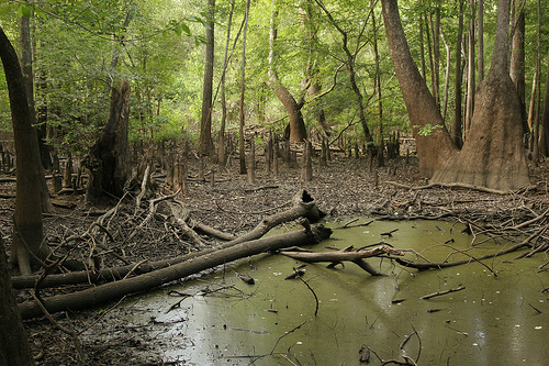 this swamp is deadly as shit.