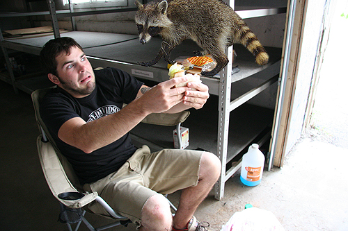 First Styx, and now Grindcore, the raccoons have had enough.